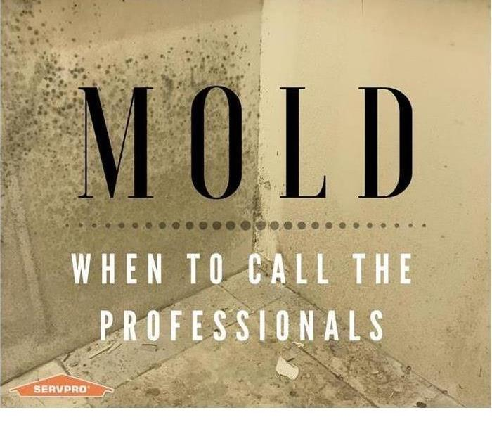 Mold Remediation Managing Mold In Your Home Or Business