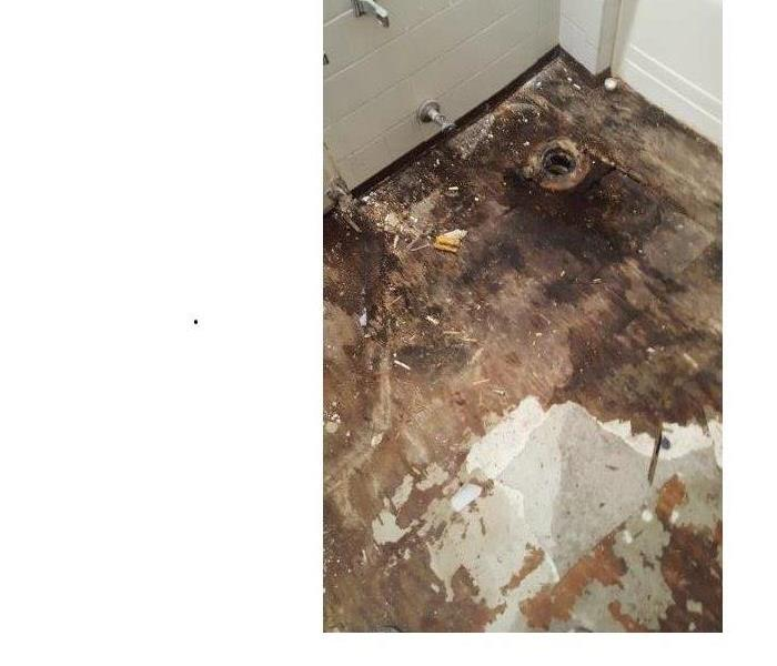 Mold Remediation Mold Growth - Proper Defense is Vital